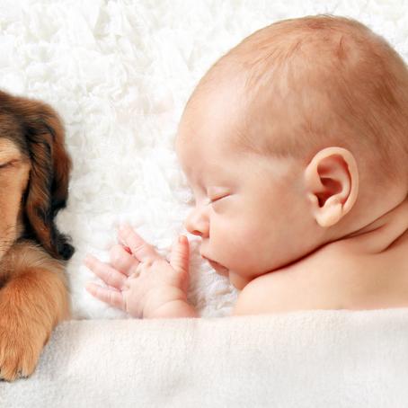 איך לגרום לכלב לקבל תינוק חדש שמצטרף למשפחה?