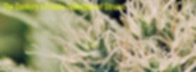 The Dankery, colorado springs marijuana