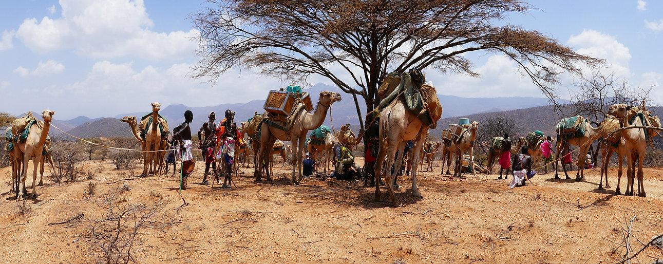 Camels resting.JPG