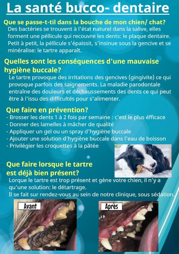 La_santé_bucco-dentaire.jpg