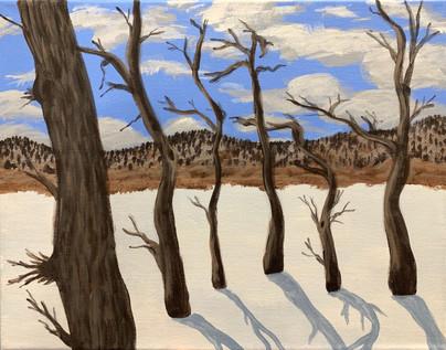 Oak Grove in Winter