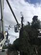 Continuamos realizando mantenimiento de líneas de media tensión
