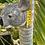 Thumbnail: Koala wall hung ceramic vase sm