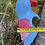 Thumbnail: Ceramic bird ornament XLG x 5 pcs