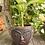 Thumbnail: Terracotta plant pot face