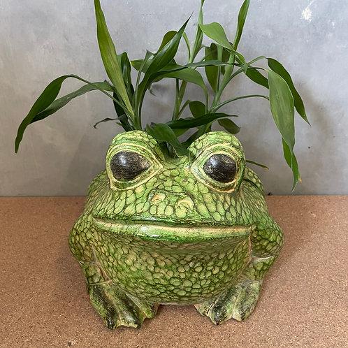 Terracotta frog planter lg