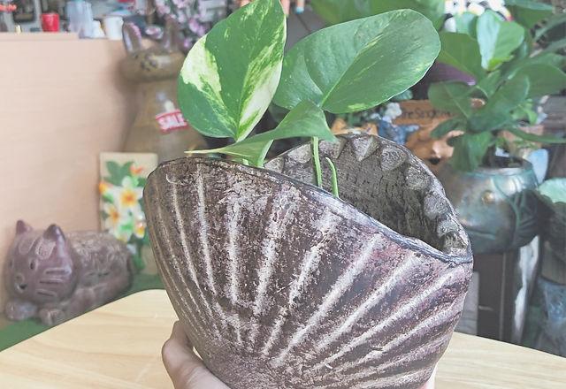 Terracotta at Uniquely Thai