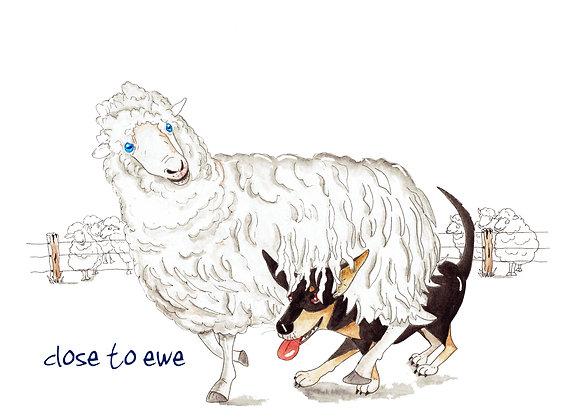 Close to ewe
