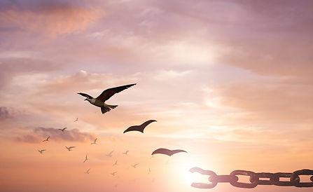解き放たれる鳥.jpg