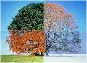 season-tree1