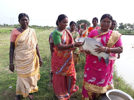 Community Based Livelihood Scheme on Pisciculture