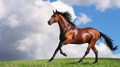 horse shiny coat