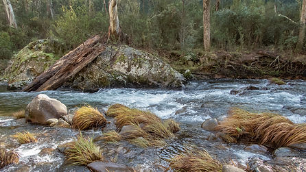Delatite River by Andrew Wettenhall   Ma