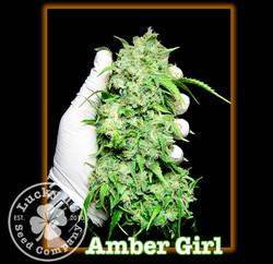 Amber Girl, Lucky 13 SeedsNEW