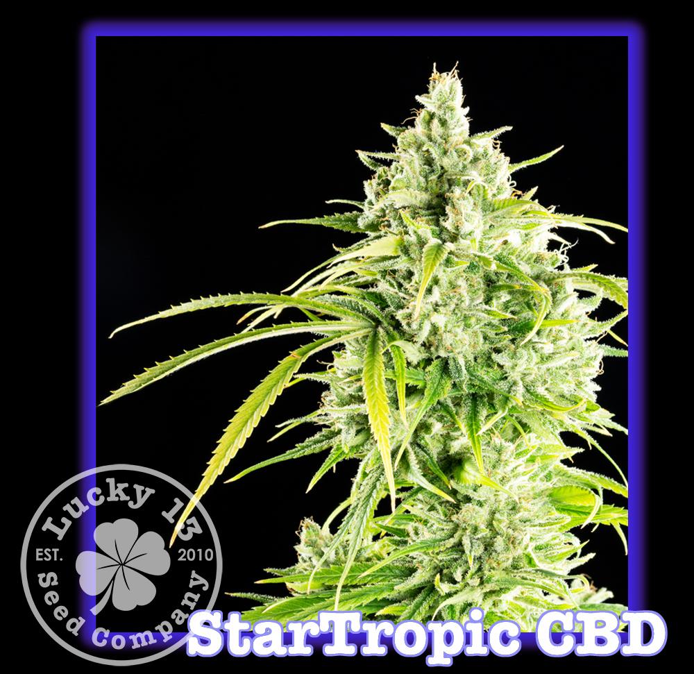 StarTropic, Lucky 13 Seeds