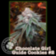 Chocolate Girl Guide Cookies2, Lucky 13
