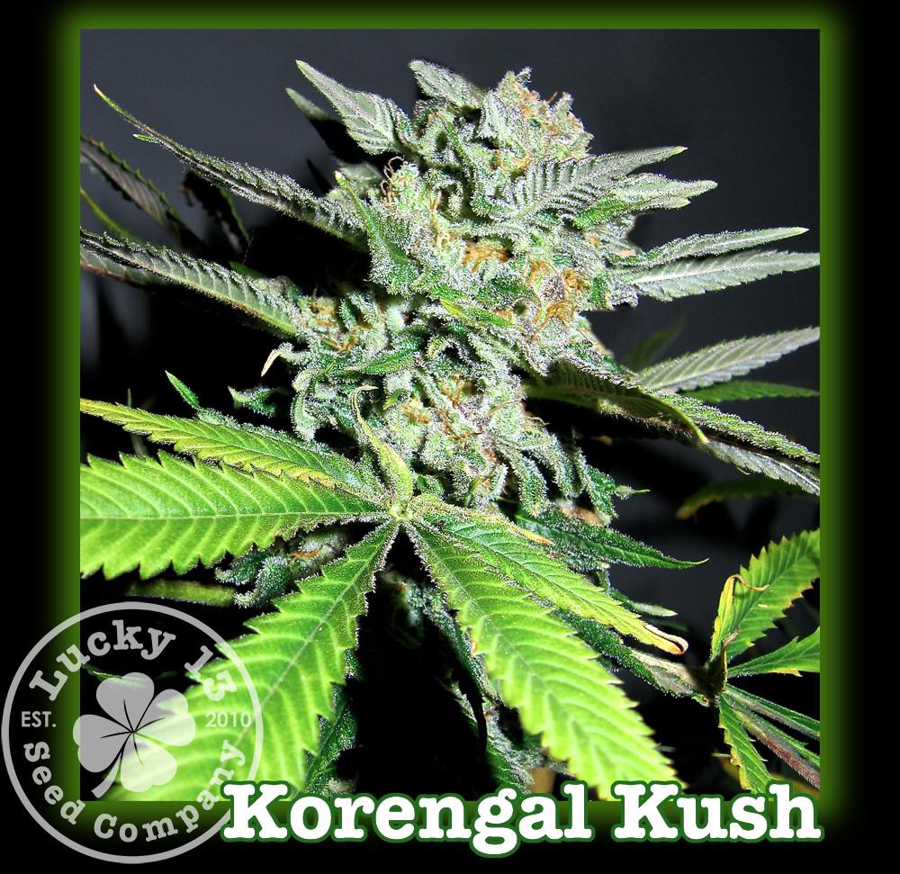 Korengal Kush Bud