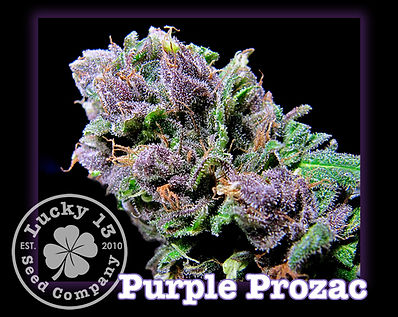 Purple Prozac, Lucky 13 Seeds.jpg