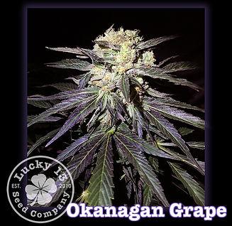 Okanagan Grape, Lucky 13 SeedsNEW.jpg