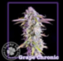 Grape Chronic, Lucky 13 Seeds.jpg