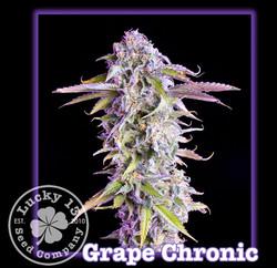 Grape Chronic, Lucky 13 Seeds