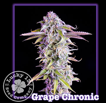 Grape Chronic, Lucky 13 Seeds.jpg