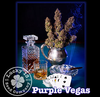 Purple Vegas, Lucky 13 Seeds.jpg
