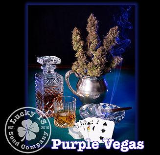 Purple Vegas, Lucky 13 Seeds.jpg