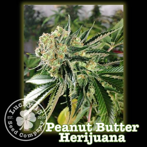 Peanut Butter Harijuana.jpg