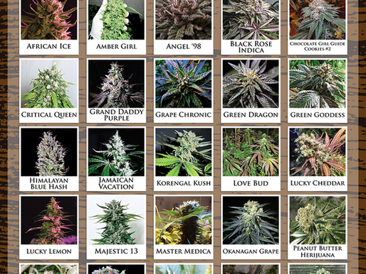 Lucky 13 Seed Company's Complete Strain List