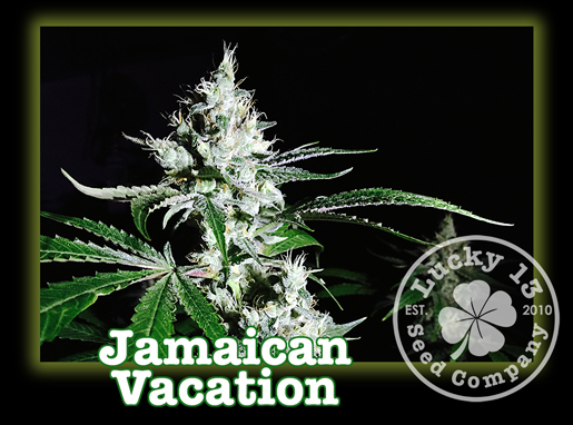 Jamaican Vacation, Lucky 13 Seeds