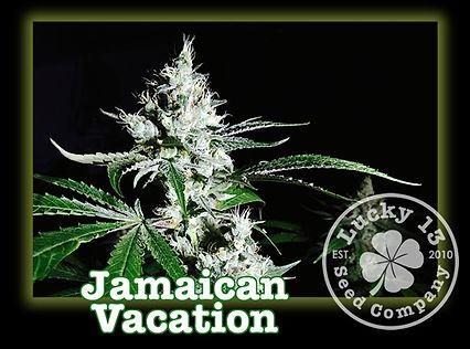 Jamaican Vacation, Lucky 13 Seeds.jpg