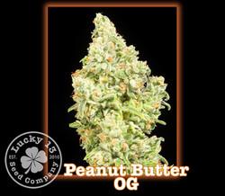 Peanut Butter OG, Lucky 13 Seeds