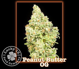 Peanut Butter OG, Lucky 13 Seeds.jpg
