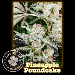 Pineapple Poundcake, Lucky 13 Seeds