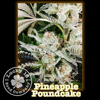 Pineapple Poundcake, Lucky 13 Seeds.jpg