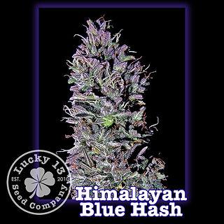Himalayan Blue Hash, Lucky 13 Seeds.jpg