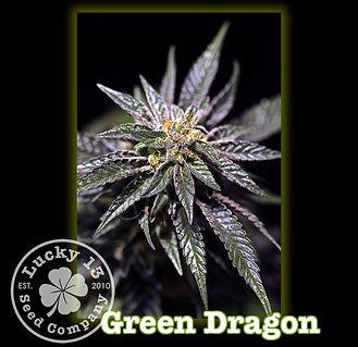 Green Dragon, Lucky 13 Seeds.jpg