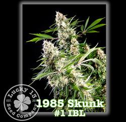 1985 Skunk #1 IBL, Lucky 13 Seeds