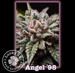 Angel '98, Lucky 13 SeedsNEW