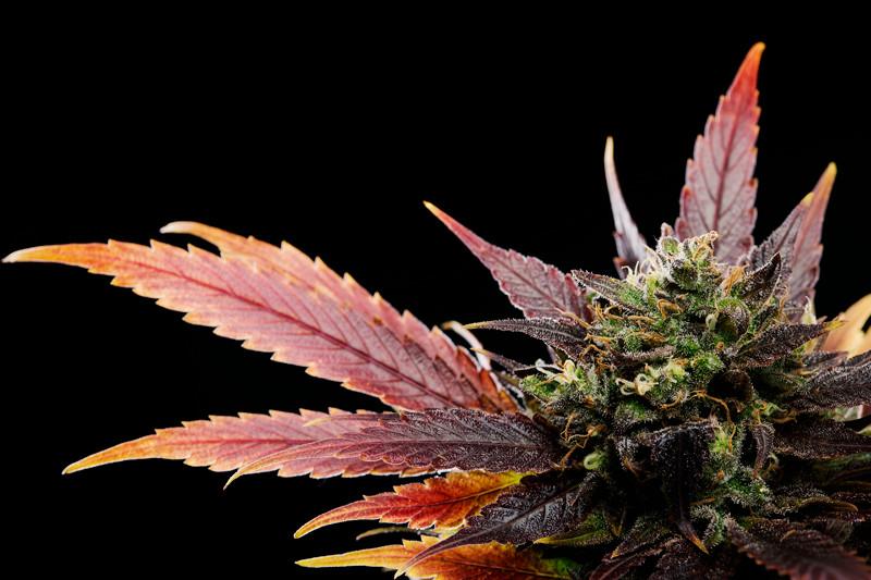 PineapplePoundcake_11.jpg