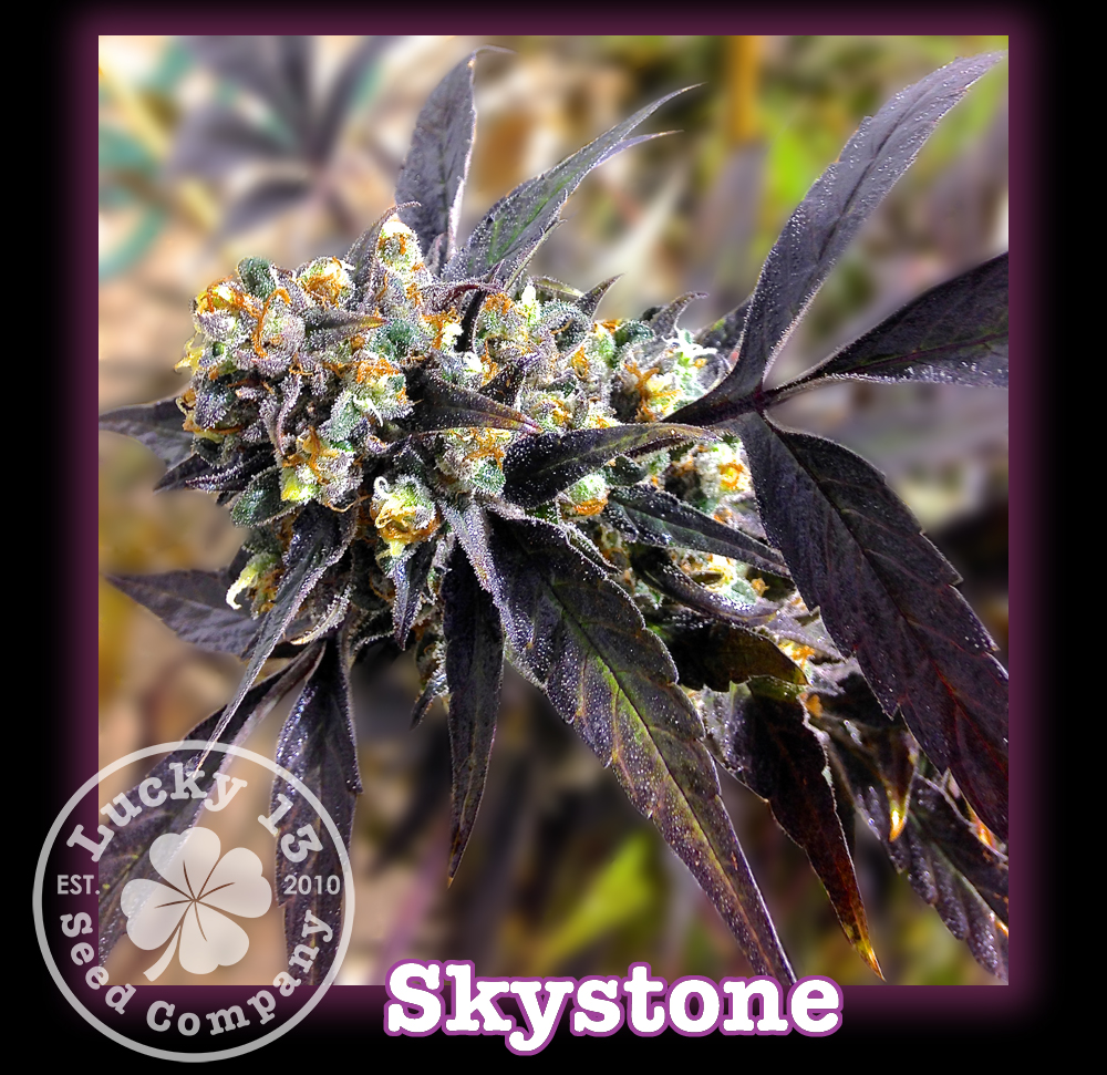 Skystone, Lucky 13 SeedsNEW