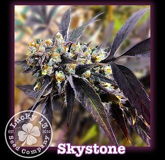 Skystone, Lucky 13 SeedsNEW.jpg