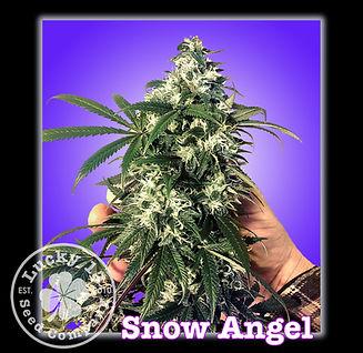 Snow Angel, Lucky 13 SeedsNEW.jpg