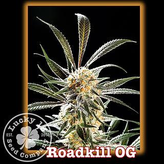 Roadkill OG, Lucky 13 Seeds.jpg