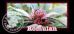 Romulan, Lucky 13 Seeds