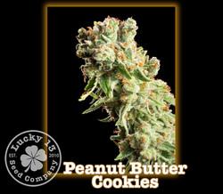 Peanut Butter Cookies, Lucky 13 Seeds