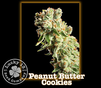 Peanut Butter Cookies, Lucky 13 Seeds.jp