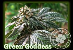 Green Goddess, Lucky 13 SeedsNEW