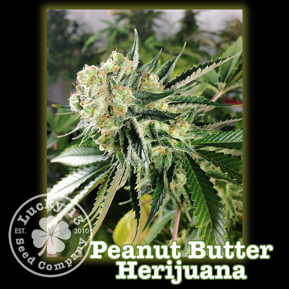 Peanut Butter HarijuanaNEW